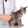 Ветеринарные клиники в Лянторе